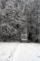 winterland 50 by priesteres-stock