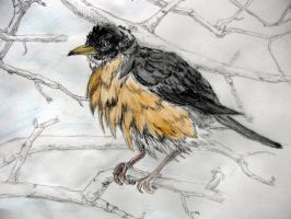 ruffed robin traditional by chrisravensar