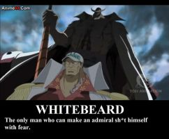 Don't mess with Whitebeard by jack916