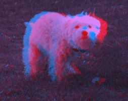 3d Anaglyph of Shelby Pooping by mightyquarfoth