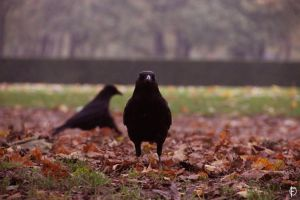 Ravens in the woods 2 by PetiteCreature