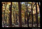 ...Forest for the Trees by ChatNoir13