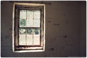 A Tragic Case of Window Pane by onnawufei