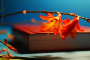 The book and crocosmia... by TheRedGirl