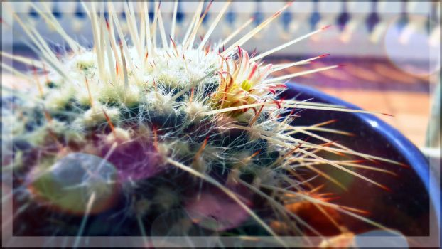 Baby Cactus by RadHomez