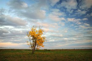 Autumn in Thessalon by tfavretto