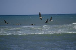 Birds Over Water by UltraSonicUSA
