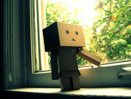 Danbo window by Nuelcaz