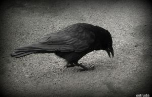 The Crow by Estruda