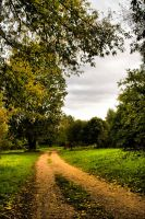 HDR autumn road by nordievind