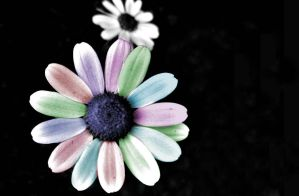 Colored Flower by Chyliethecrazy1