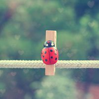 Ladybeetle by etherealwinter