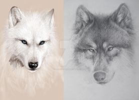wolf sketches by SaiFongJunFan