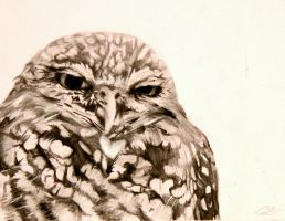 Charcoal Owl by SurpassingSolitude