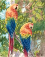 Parrots by tiffc