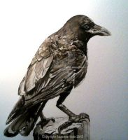 Inktober 2015: Day 14 - Crow by SuzanneHole