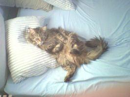 my cat on my bed by cleo8