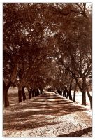 Tunnel of Trees by fGimbra