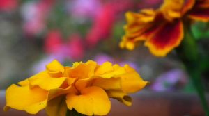 A Splash of Color by RainedropsAreFalling