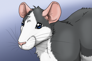 Rat face and speed painting by SweGizmo
