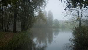 Foggy Lake View in Autumn by Danimatie