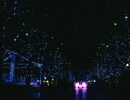 Avenue of Lights by willmeister42