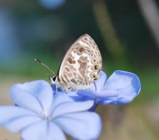 Nature - Butterfly Stock 03. by stock-basicality