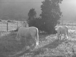 horses in the dusk by SHTRIPP