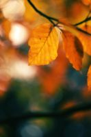 Just leaves by Lillian-Bann