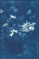 Let It Go: Cyanotype by xXCold-FireXx