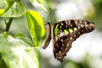 Exquisite Lepidotera by sellsworth