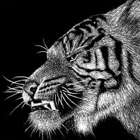 Scratchboard Tiger Profile by gigazelle