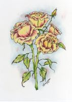 Pink and Yellow Roses by concettasdesigns