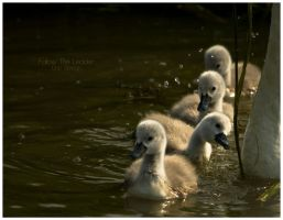 Follow The Leader by Solau