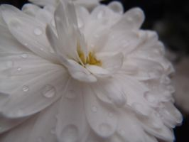 White Raindrops by Mihaela7