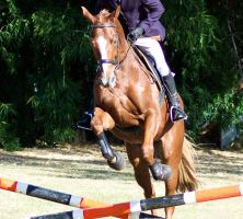 Showjumping front on by Chunga-Stock