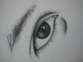 Eye study by Magreet