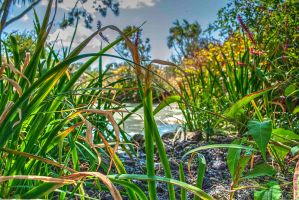 Summer Pond by Bazz-photography