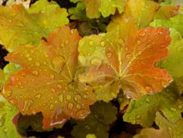 Rain-soaked Autumn Leaves 2 by MogieG123