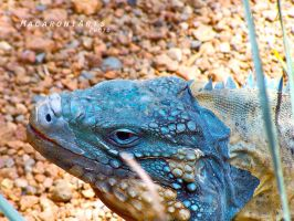 Turquoise Closeup by thebreat