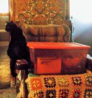 Stormy 'What is Mommy's tub doing in OUR chair?!' by MystMoonstruck