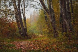 Autumn Forest 3 by ManicHysteriaStock