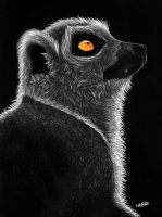 Ring Tailed Lemur by tuftedpuffin