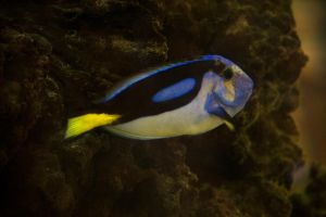Parrot Fish Stock-2014-1 by toshema