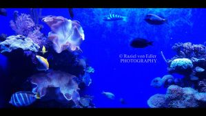 DSC01119Aquarium by RazielMB-PhotoArt