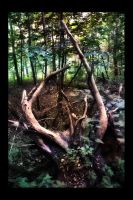 Roots by digitaldreamz666