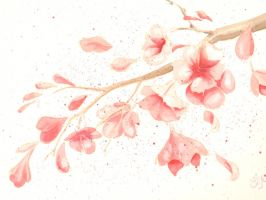 Cherry blossom branch by grafithjarta