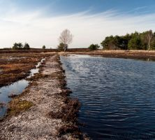 Heathlands after winter by FlyingMantaRay