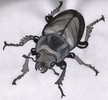 Female Stag Beetle... by Beth182