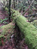 Moss Log by SuperJay876